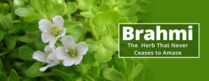 Brahmi- The Herb that Never Ceases to Amaze